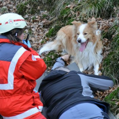 ausrüstung für rettungshunde